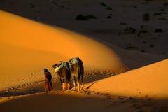 Touareg und Kamele stockbilder