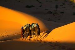 Touareg und Kamele Stockfoto