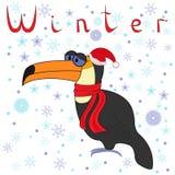 Toucan为什么在冬天是很冷的? 免版税库存图片