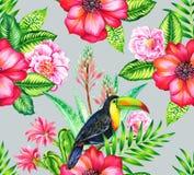 Toucan和cammelias,热带无缝patern 库存照片