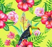 Toucan和cammelias,热带无缝patern 免版税库存图片