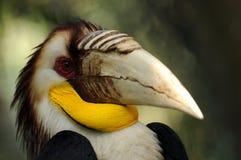 toucan的公园 免版税库存图片