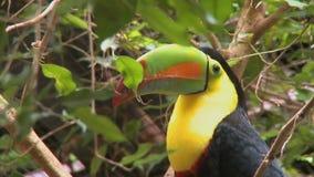 toucan看