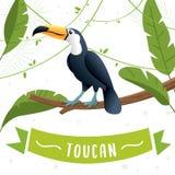 Toucan鸟卡通人物 库存例证