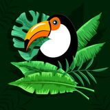 Toucan鸟在热带森林里 皇族释放例证