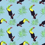 toucan鸟的无缝的水彩例证 热带叶子,密集的密林 与热带夏令时主题的样式 E 库存例证