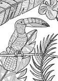 Toucan детализировало иллюстрацию Стоковые Фото