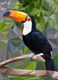 Toucan низко поли стоковая фотография