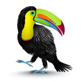 Toucan. Vector illustration of a toucan vector illustration