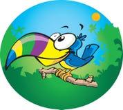 toucan στοκ φωτογραφίες