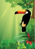 toucan Royaltyfria Bilder
