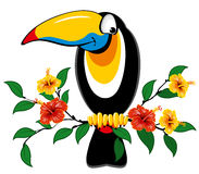 Toucan. Cheerful toucan sitting on a branch with tropical flowers Stock Photo