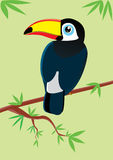 Toucan. The vector illustration amusing toucan sits on a tree Royalty Free Stock Photography