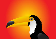 Toucan Foto de Stock Royalty Free