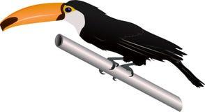 toucan Royaltyfri Foto