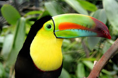 Toucan Images stock