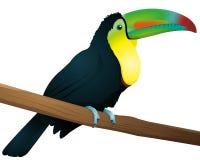 Toucan Imagen de archivo