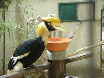 toucan Стоковая Фотография