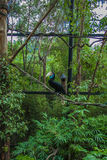 Toucan Foto de Stock Royalty Free