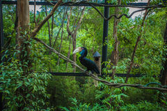 Toucan Fotografia de Stock Royalty Free