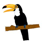 toucan 库存图片