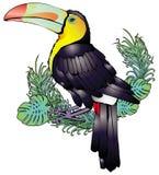 toucan Fotografering för Bildbyråer