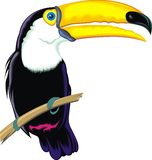 Toucan Stock Photos