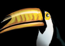 Toucan libre illustration
