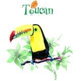 Toucan auf Zweig Dekoratives Bild einer Flugwesenschwalbe ein Blatt Papier in seinem Schnabel vektor abbildung
