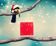 Toucan avec le chapeau et le cadeau de Noël de Santa Photos stock