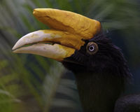 Toucan in an aviary Royalty Free Stock Photography