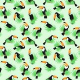 The   toucan background Royalty Free Stock Photos