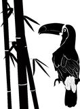 Toucan and bamboo Stock Photography