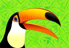 Toucan, Beak, Fauna, Bird Royalty Free Stock Images