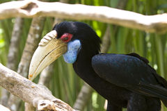Toucan Bird Stock Images