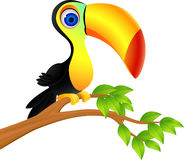 Toucan bird Royalty Free Stock Images