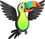 Toucan bird Royalty Free Stock Image
