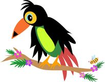 Toucan Bird with Bee Stock Images