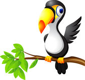 Toucan bird cartoon Stock Images