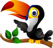 Toucan bird cartoon presenting Stock Images