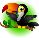 Toucan bird cartoon presenting Stock Photo