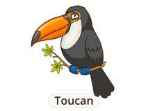 Toucan bird cartoon vector illustration Royalty Free Stock Images