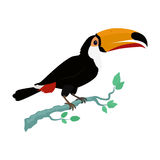 Toucan Bird Flat Design Vector Illustration. Toucan vector. Animals of rainy Amazonian forests in flat design. Fauna of South America. Wild life in tropics Stock Photos