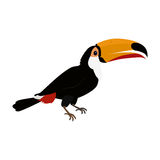 Toucan Bird Flat Design Vector Illustration. Toucan vector. Animals of rainy Amazonian forests in flat design. Fauna of South America. Wild life in tropics Stock Images