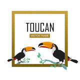 Toucan Bird Flat Design Vector Illustration. Toucan vector frame. Animals of Amazonian forests in flat design. Fauna of South America. Wild life in tropics Royalty Free Stock Image