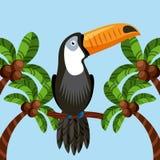 Toucan bird icon Stock Images