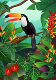 Toucan bird illustration Royalty Free Stock Photo