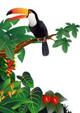 Toucan bird illustration Royalty Free Stock Photography