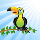 Toucan bird sitting on vetch Royalty Free Stock Photo