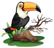 Toucan bird standing on rock Royalty Free Stock Photos